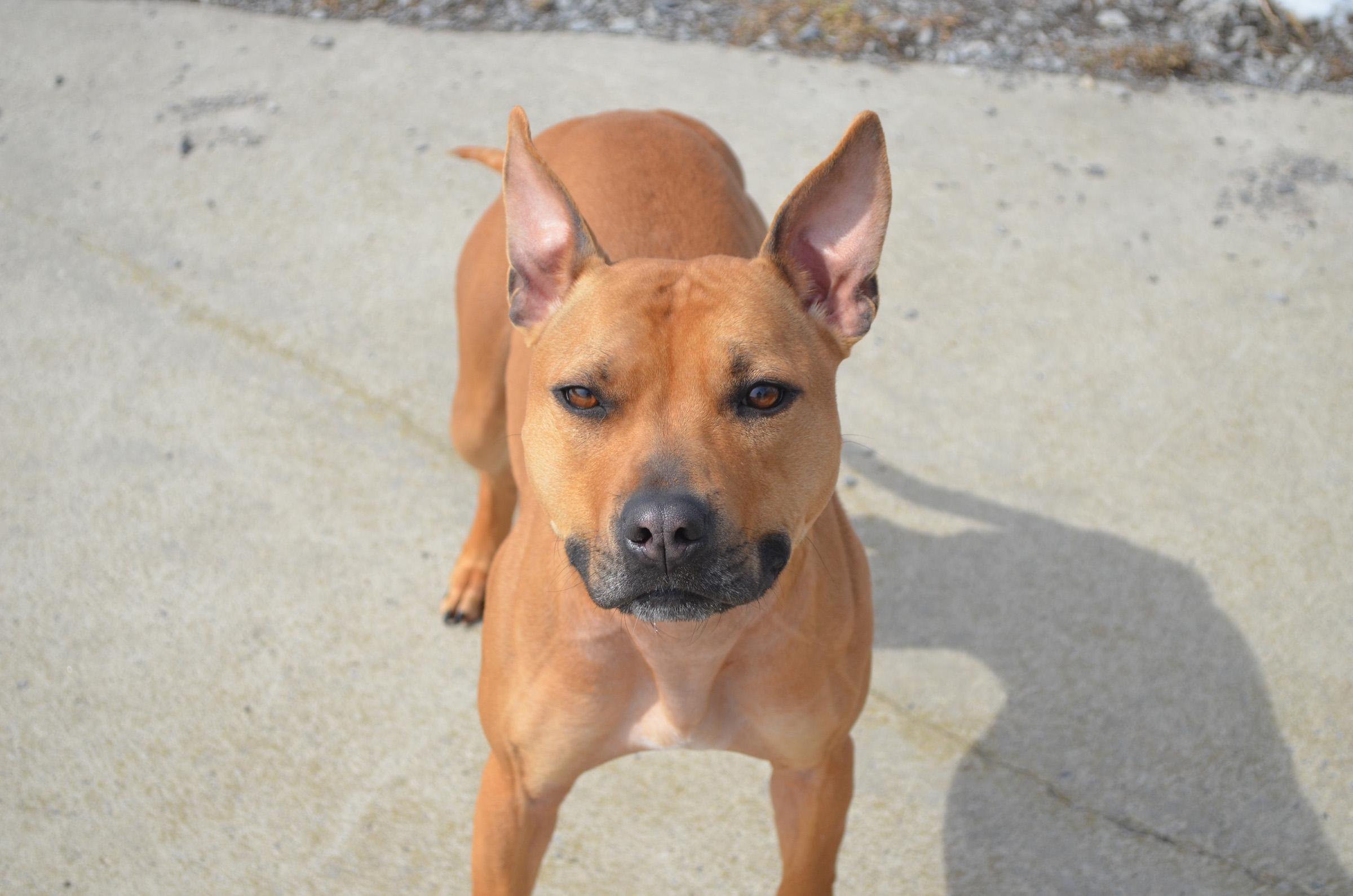 Adopt-A -Pet Featured Pet