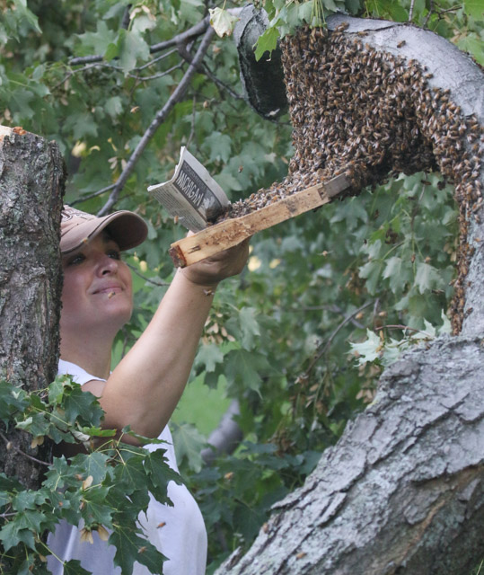 Honey Bees Saved
